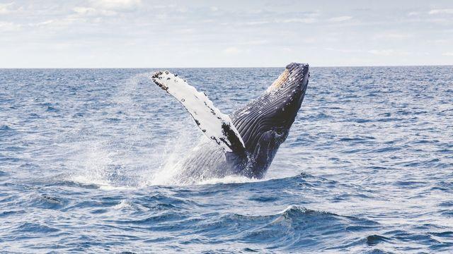 sea-ocean-splash-mammal-humpback-whale-vertebrate-34572-pxhere.com (1).jpg